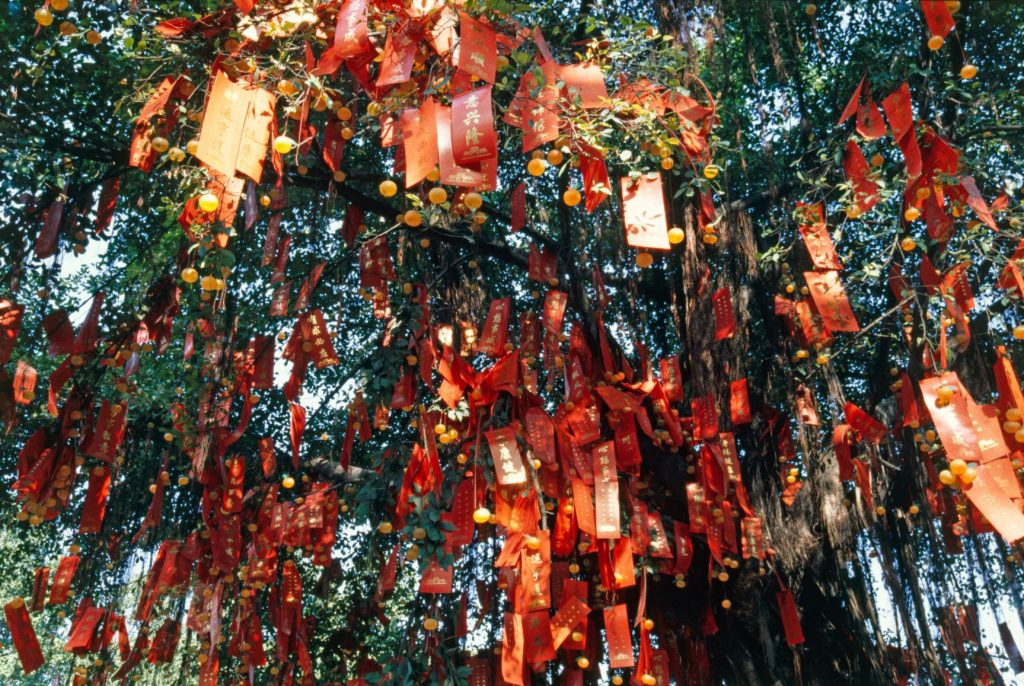 Lam Tsuen Wishing Tree Hong Kong